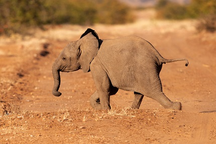 An elephant at De Beers' Venetia Limpopo Nature Reserve, part of the Diamond Route in South Africa..jpg